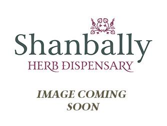 Image Coming Soon Reishi Spore Oil (Ganoderma lucidium) 60 caps